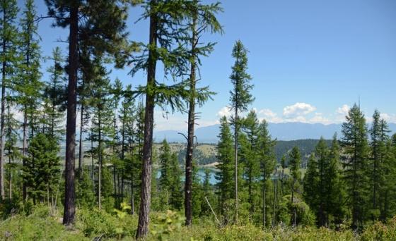 Foys lake overlook
